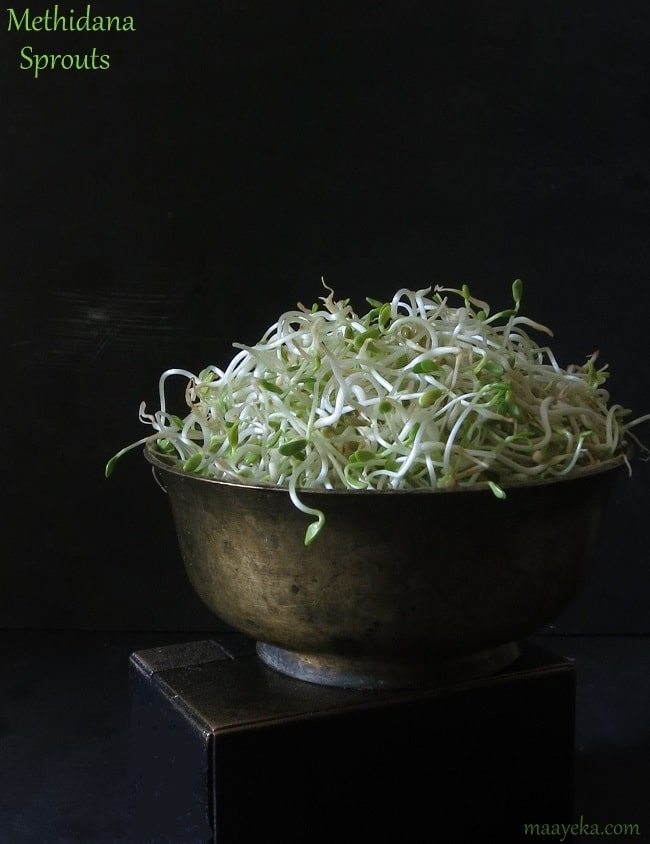 methi dana sprouts